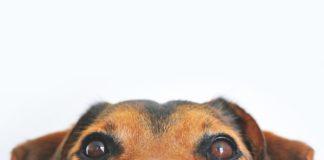 dierenverzekering